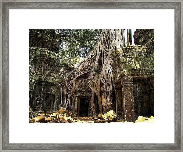 Overgrown Jungle Temple Tree  Framed Print