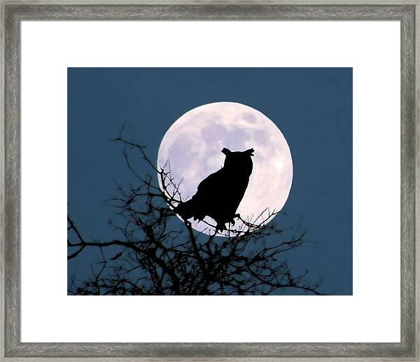 Owl And Blue Moon Framed Print