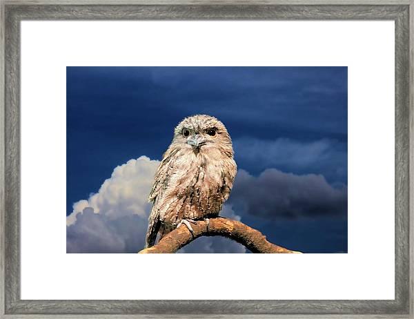 Owl At Dusk Framed Print
