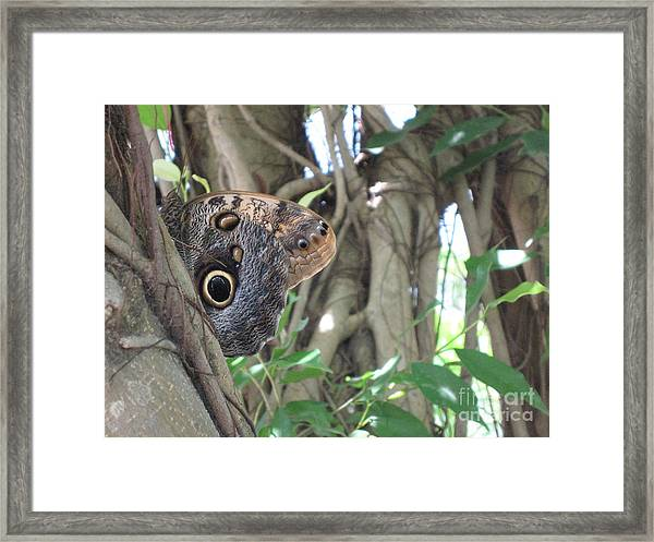 Owl Butterfly In Hiding Framed Print
