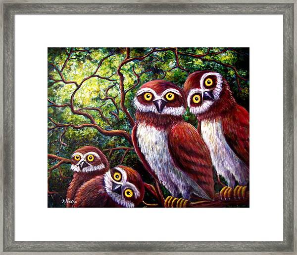 Owl Family Framed Print
