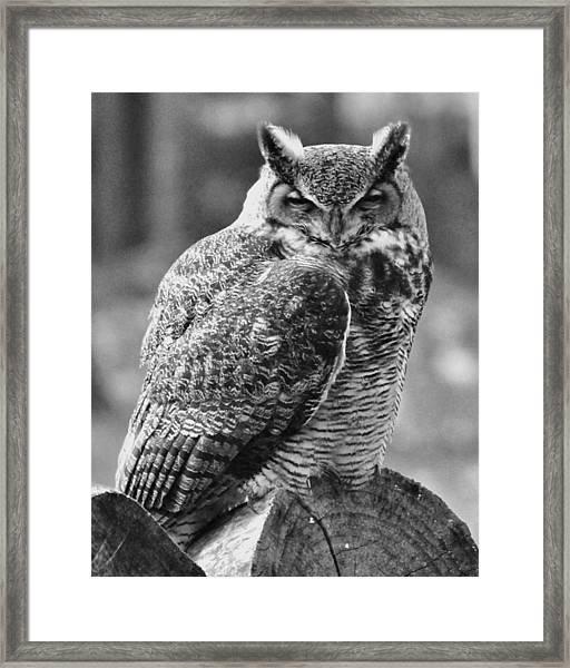 Owl In Black And White Framed Print