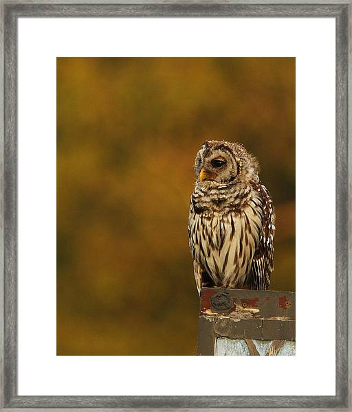 Owl On A Fence Framed Print