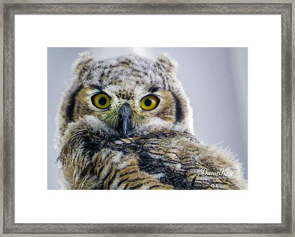 Owlet Close-up Framed Print