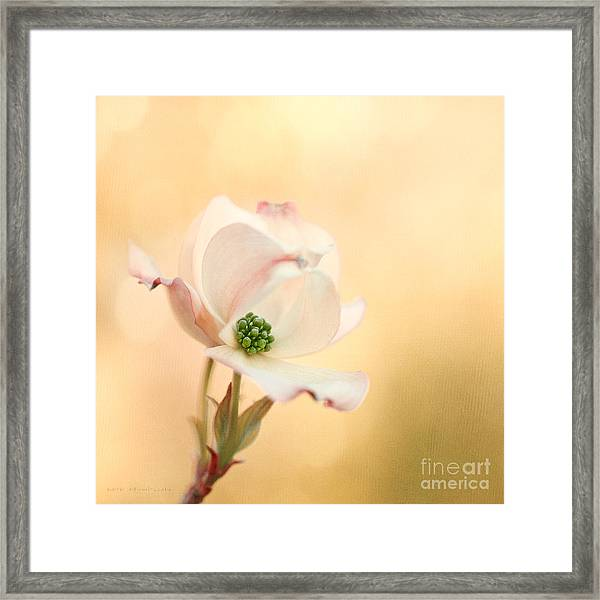 Pacific Dogwood Framed Print by Beve Brown-Clark Photography