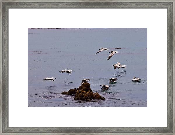 Pacific Landing Framed Print