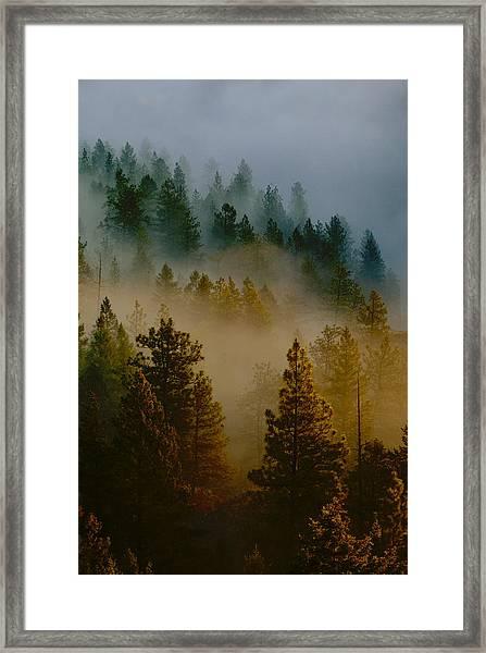 Pacific Northwest Morning Mist Framed Print