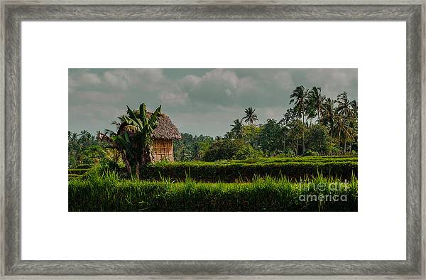 Paddy Fields Framed Print
