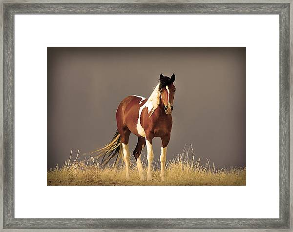 Paint Filly Wild Mustang Sepia Sky Framed Print
