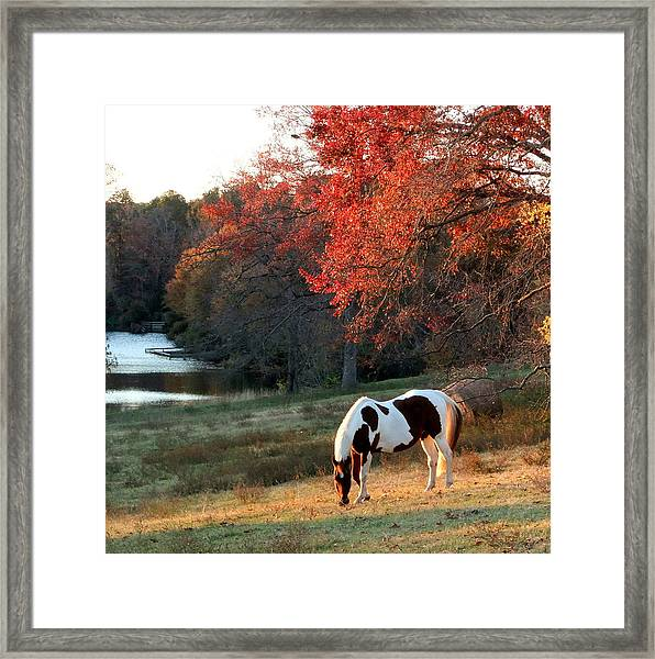 Paint Horse In The Fall Framed Print