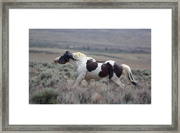 Paint Mustang Stallion Framed Print
