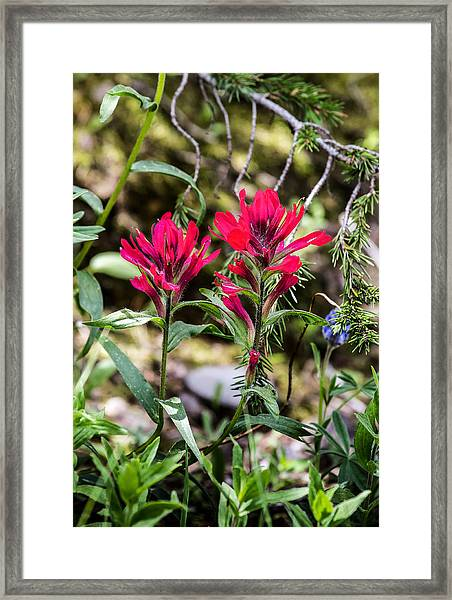 Paintbrush Framed Print