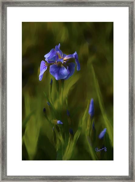 Painted Alaskan Wild Irises Framed Print