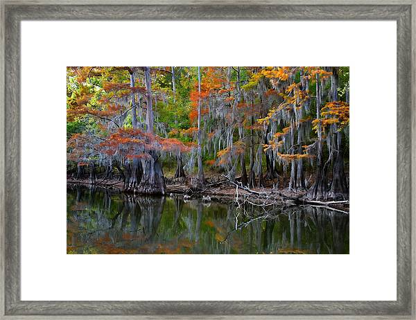 Painted Bayou Framed Print