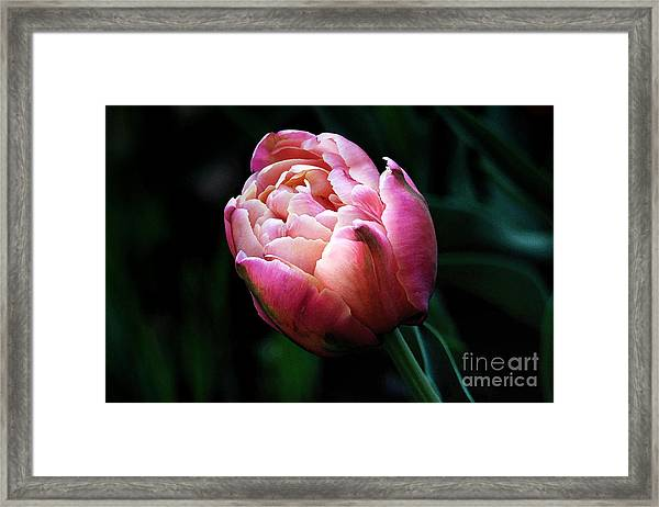 Painted Tulip Framed Print