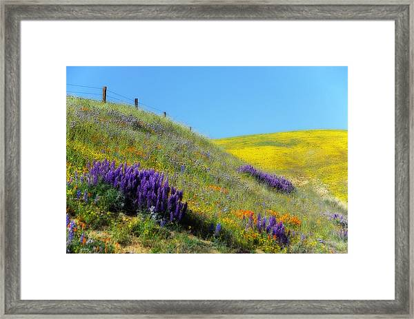 Painted With Wildflowers Framed Print