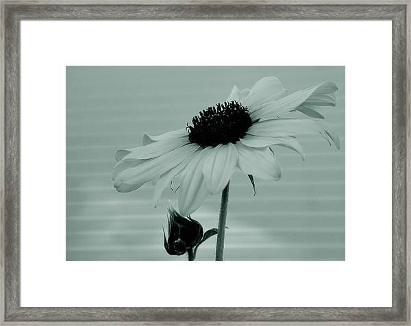 Pale Beauty Framed Print