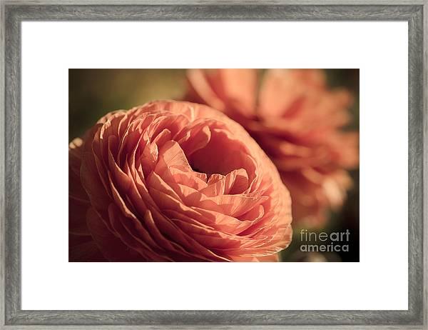 Pale Pink Petals Framed Print