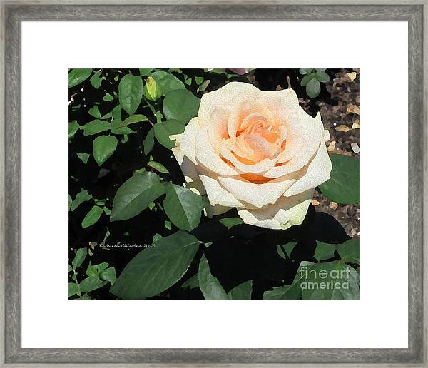Pale Rose Framed Print