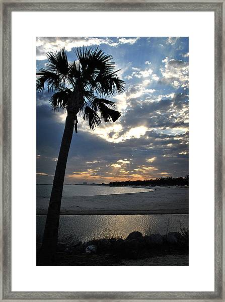 Palm And Sky Framed Print