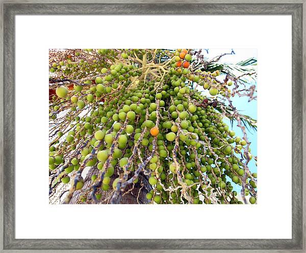Palm Grapes Framed Print