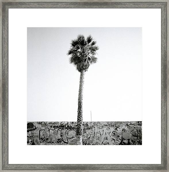 Palm Tree And Graffiti Framed Print