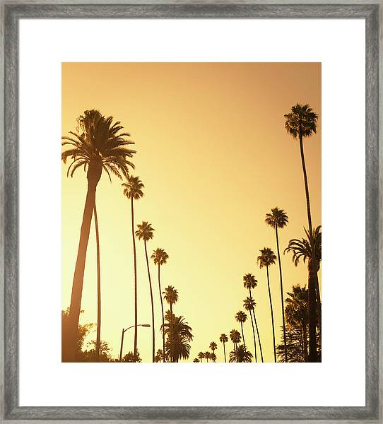 Palm Tree At Sunset On Beverly Hills Framed Print