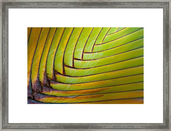 Palm Tree Leafs Framed Print