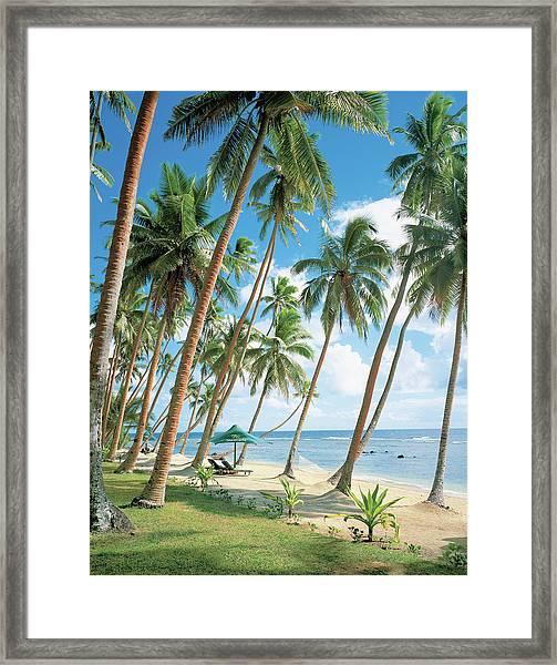 Palm Tree Near Beach Framed Print