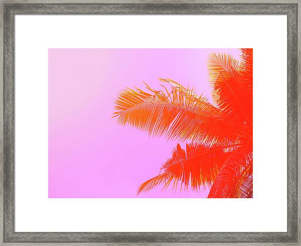 Palm Tree On Sky Background. Palm Leaf Framed Print