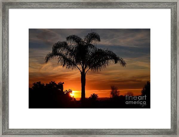 Palm Tree Sunset Framed Print