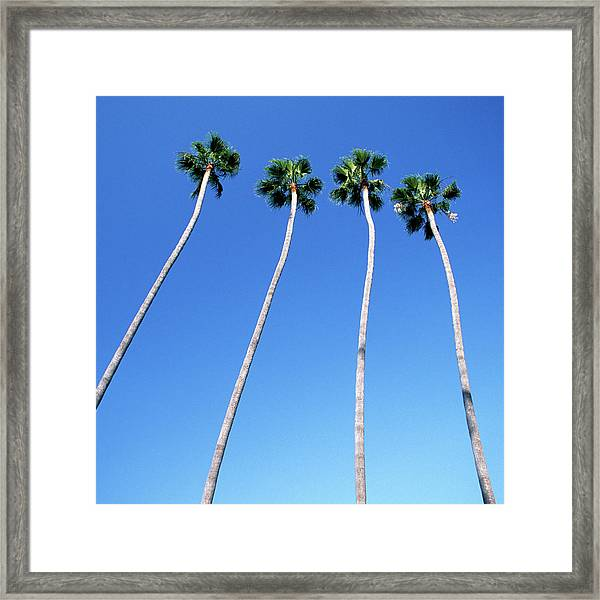 Palm Trees Lining Hollywood Boulevard Framed Print