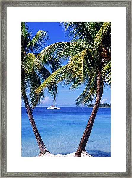 Palm Trees On Beach Framed Print