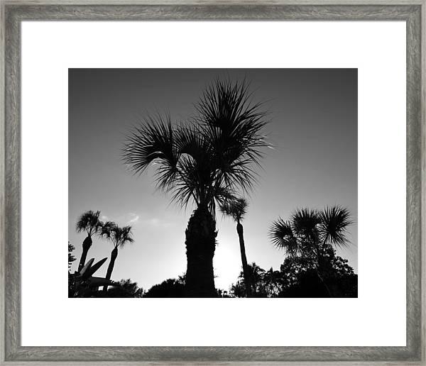 Palm Trees Reach For The Sky Framed Print