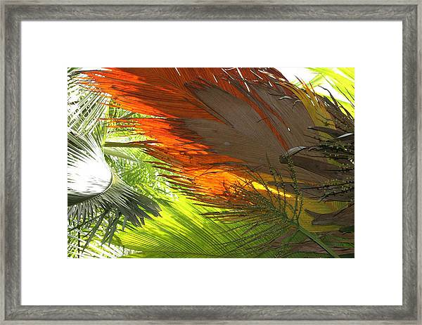 Framed Print featuring the photograph Palms by Debbie Cundy