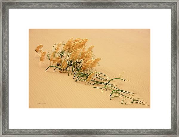 Pampas Grass In Sand Dune Framed Print