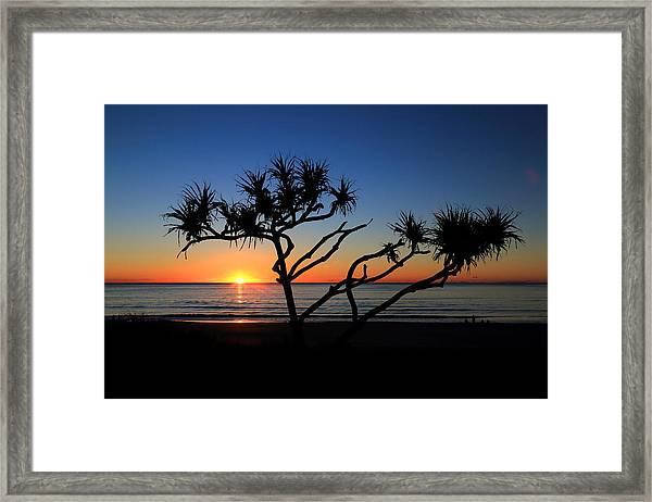 Pandanus Sunrise Framed Print