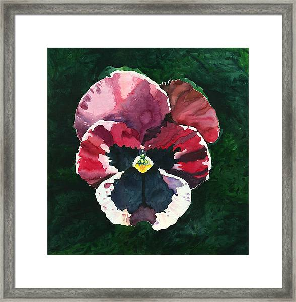 Pansy Red Framed Print