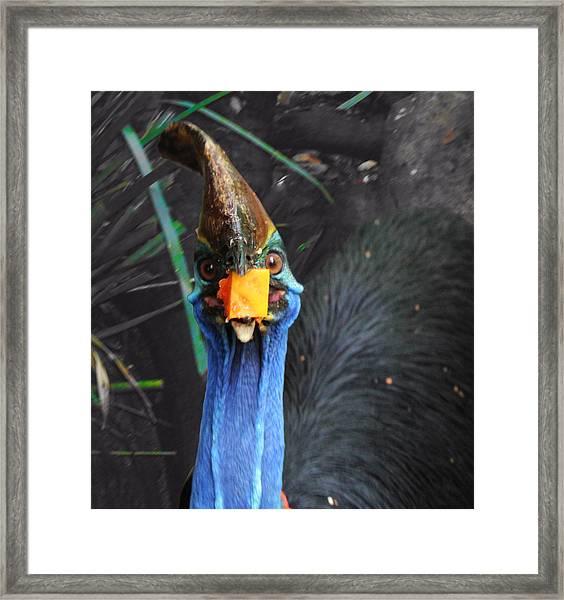 Papaya Tastes Good Framed Print by Debbie Cundy