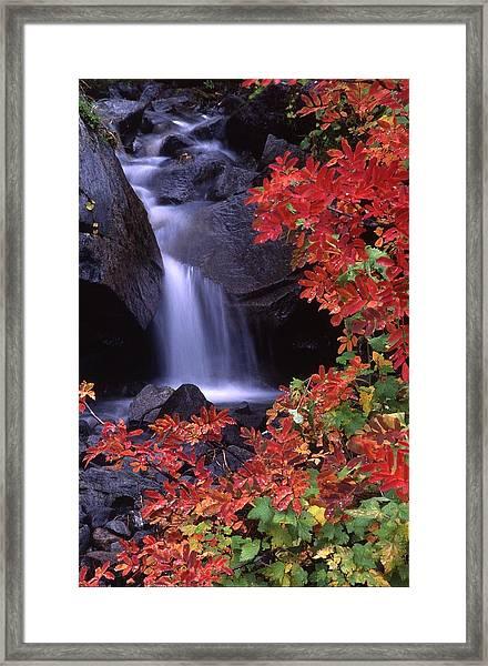Paradise Valley Stream In Fall Framed Print