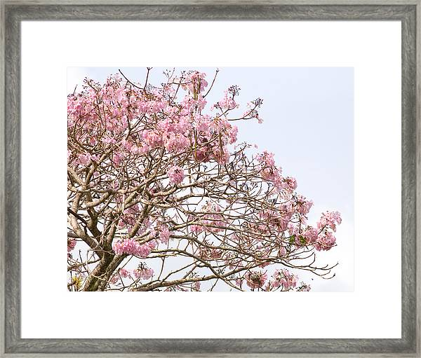Parakeets Hiding In The Flowers Framed Print by Brian Magnier