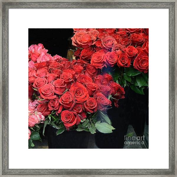 Paris Red French Market Roses - Paris French Flower Market Red Roses  Framed Print by Kathy Fornal