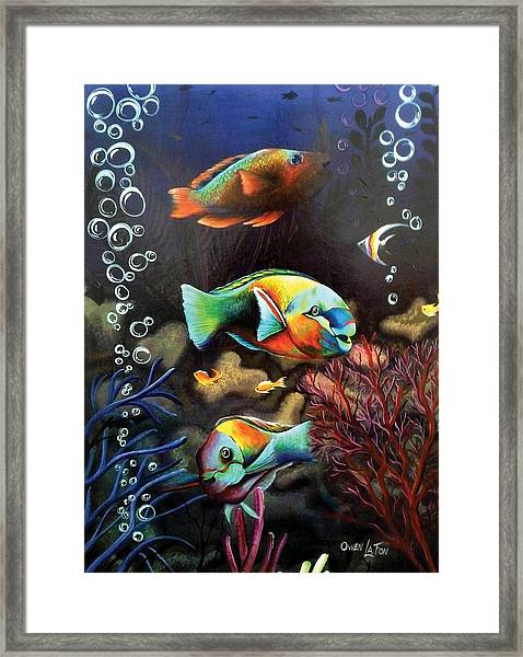 Parrot Fish Framed Print
