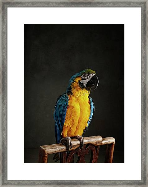 Parrot Perched On Chair Framed Print