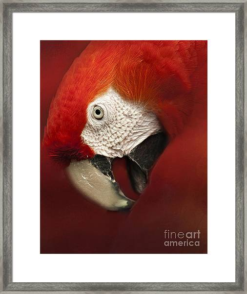 Parrot Portrait Framed Print