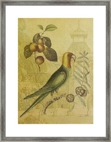 Parrot With Plums Framed Print