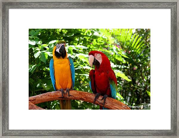 Parrot's Perch Framed Print