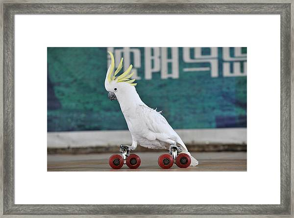 Parrots Performance To Celebrate May May Holiday Framed Print by China Photos