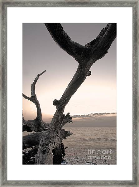 Framed Print featuring the photograph Pass The Salt Please by Glenda Wright
