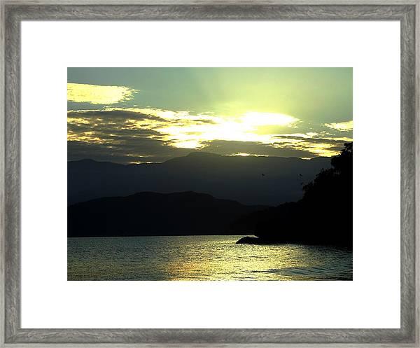Passaros   Framed Print